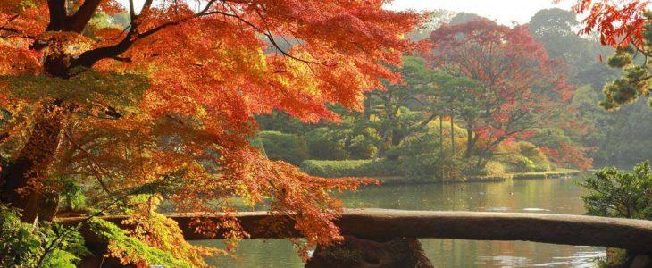 Tempat melihat musim gugur terbaik di Tokyo