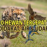 10 Hewan Tercepat Didunia Daratan Air Udara
